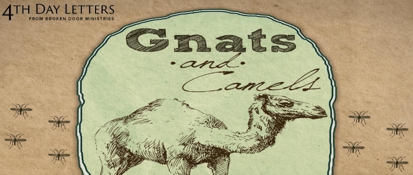 STRAINING GNATS—SWALLOWING CAMELS - Broken Door Ministries